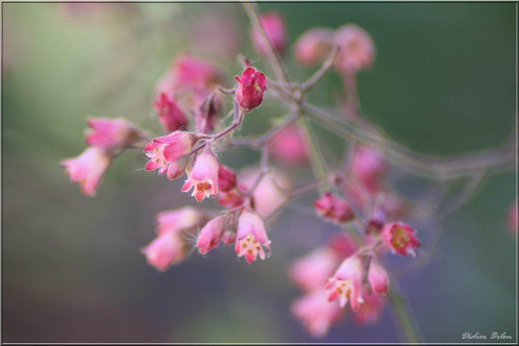 floral inspiration – IMG – 7004-2