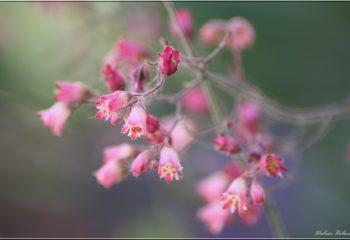 floral inspiration - IMG - 7004-2