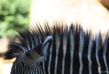 Safari discovery IMG - 79524593