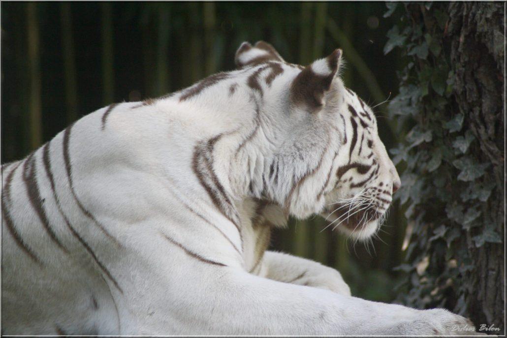 Safari discovery IMG – 79624603