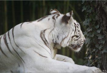Safari discovery IMG - 79624603