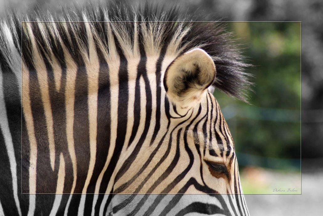 Safari discovery IMG – 8624-1