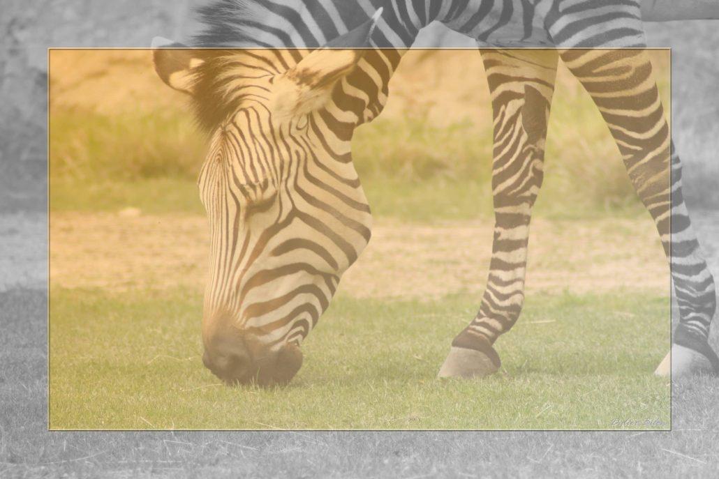 Safari discovery IMG – 8649-1