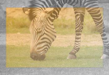 Safari discovery IMG - 8649-1