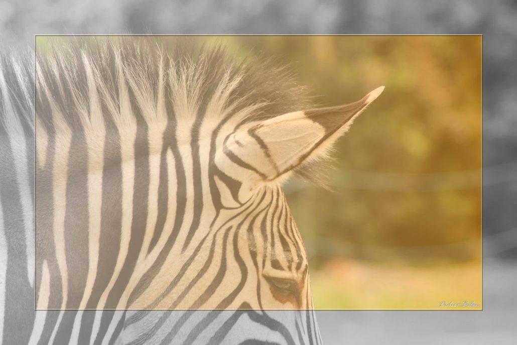 Safari discovery IMG – 8650-1