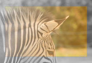 Safari discovery IMG - 8650-1