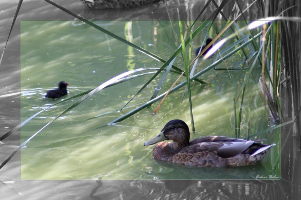 Flight of birds – IMG – 1020-1