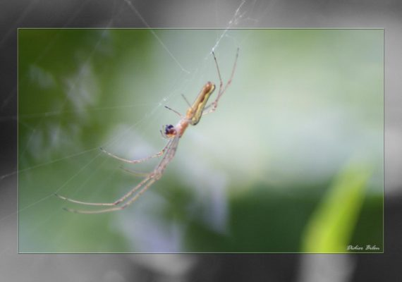 Over the spiderweb IMG 1170-1