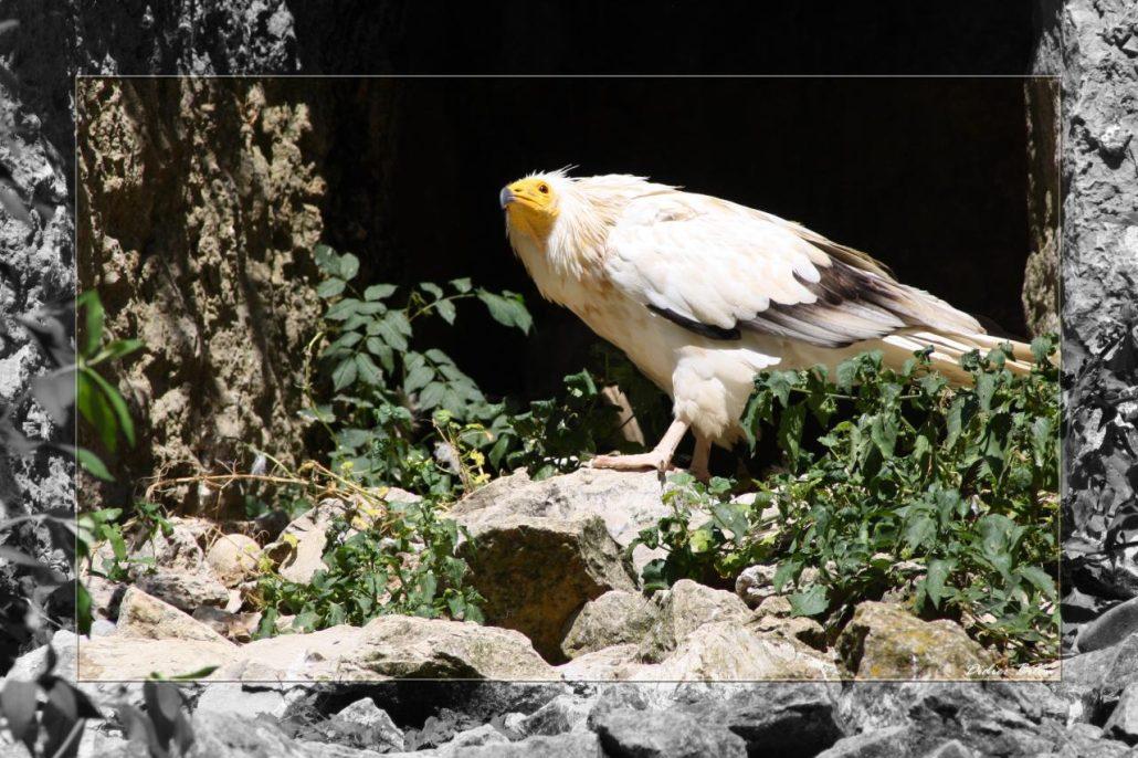 birds of prey – IMG – 1268-1