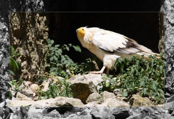 birds of prey - IMG - 1268-1