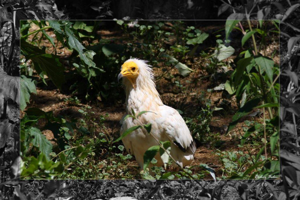 birds of prey – IMG – 1271-1