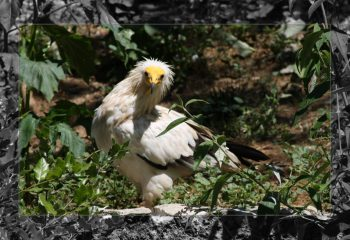 birds of prey - IMG - 1272-1