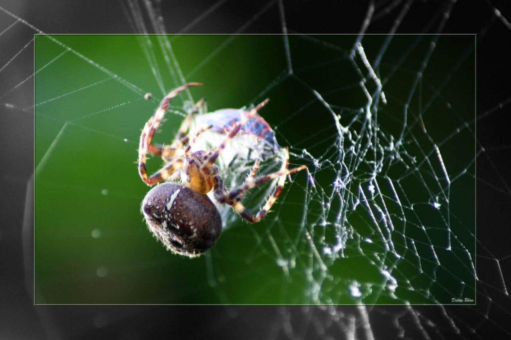 Over the spiderweb IMG 3621-1