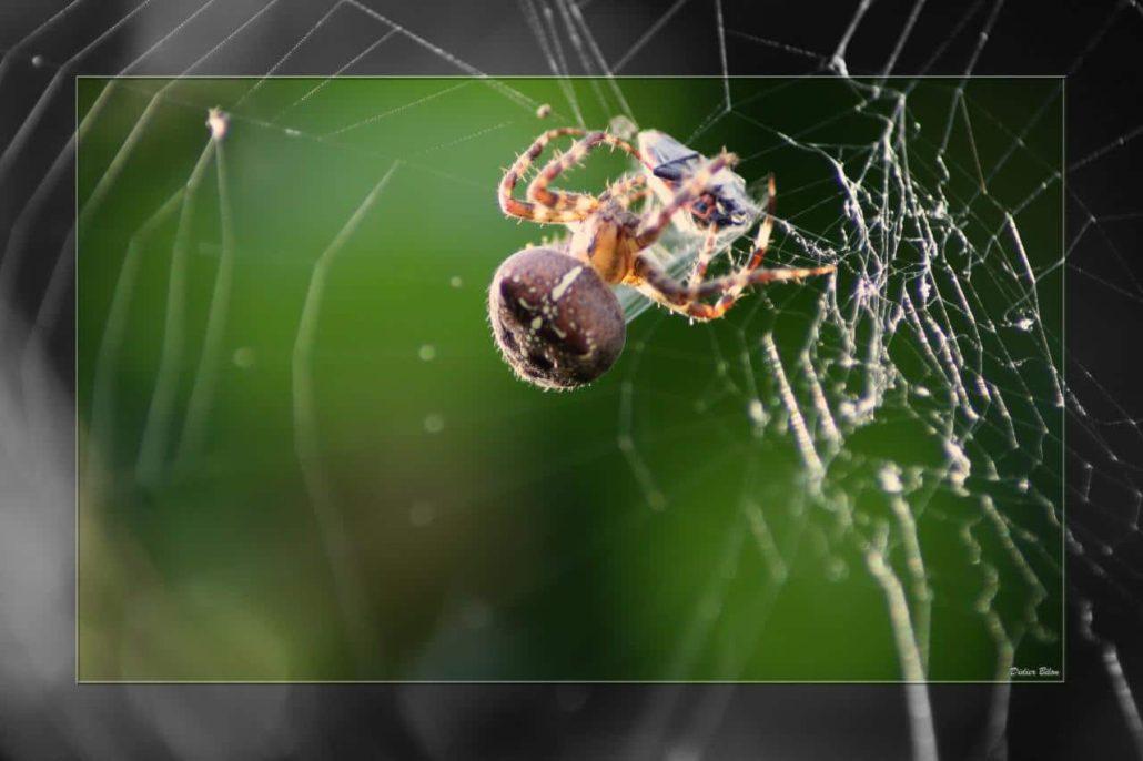 Over the spiderweb IMG 3622-1