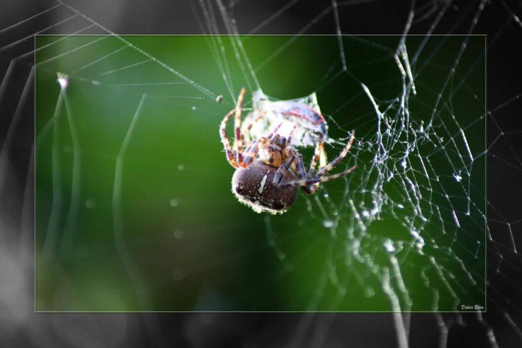 Over the spiderweb IMG 3626-1
