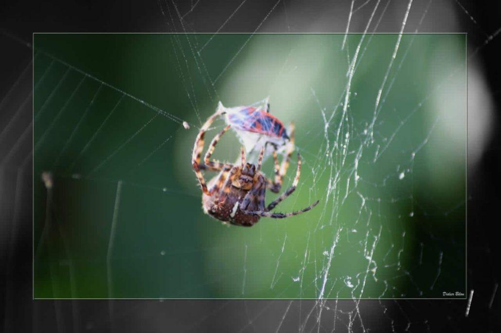 Over the spiderweb IMG 3631-1