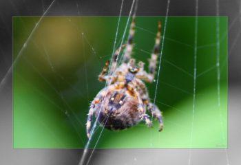 Over the spiderweb IMG 3681-1