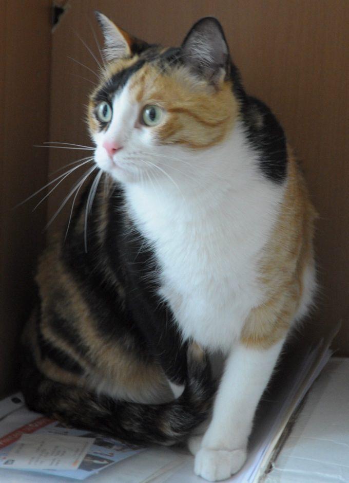 Mon chat pose