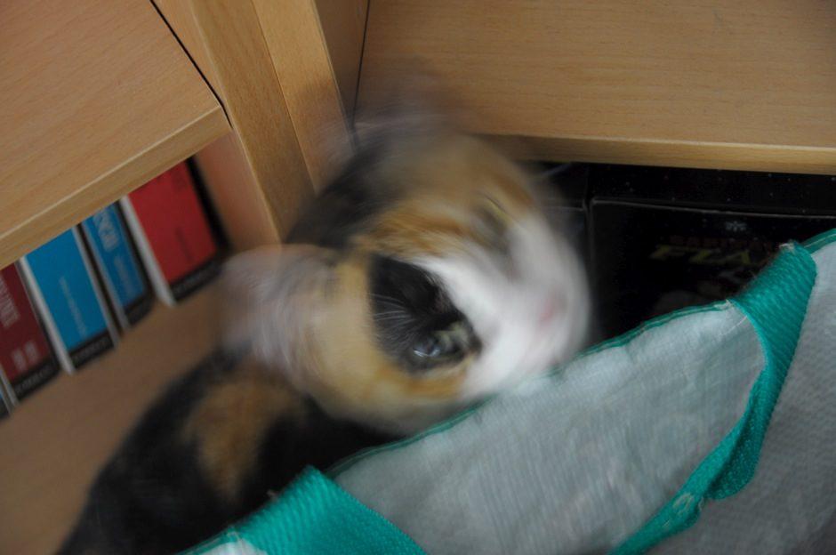 Mon chat fait lui même les effets photos ;-)