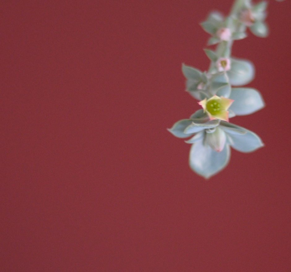 Première floraison