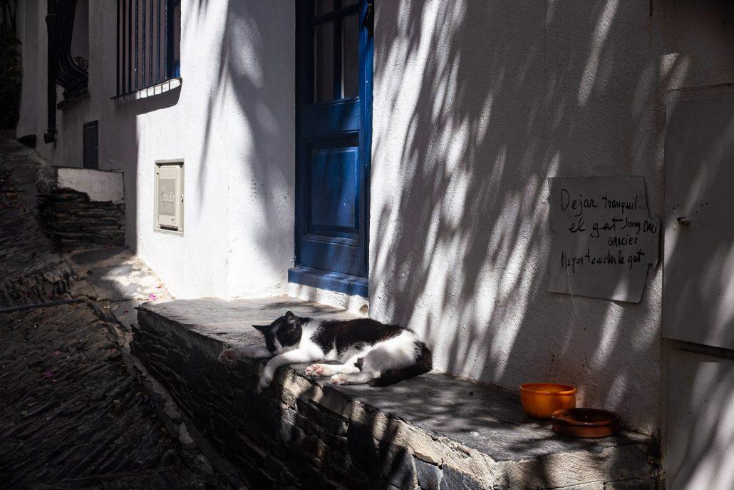 Dejar tranquil el gat