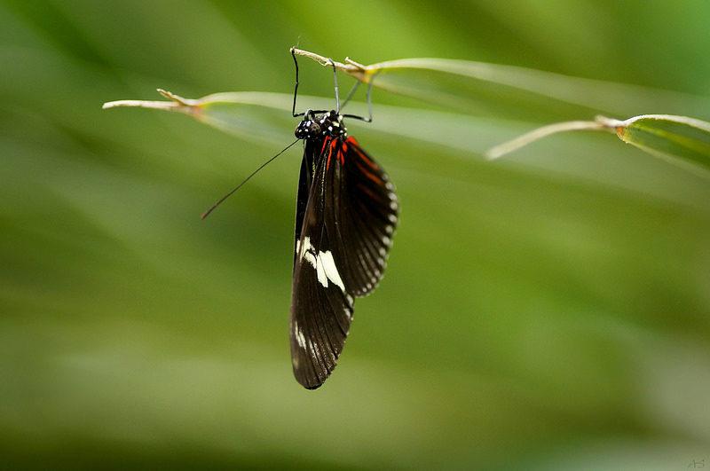 Reverse Butterfly