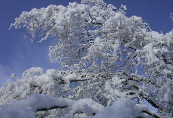 contraste hivernal