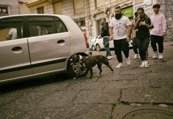Napoli's dogs