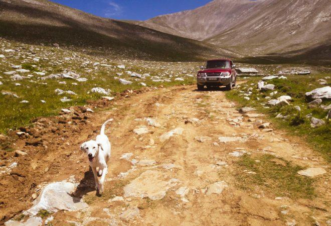 Dog in Olymp Mountain
