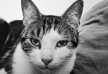 Photos de mon chat