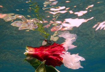 Fleur sous-marine