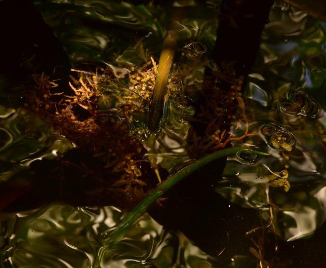 Intimité de la mangrove
