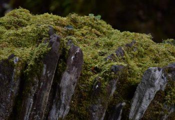 Mousse à Kylemore Abbey, Connemara