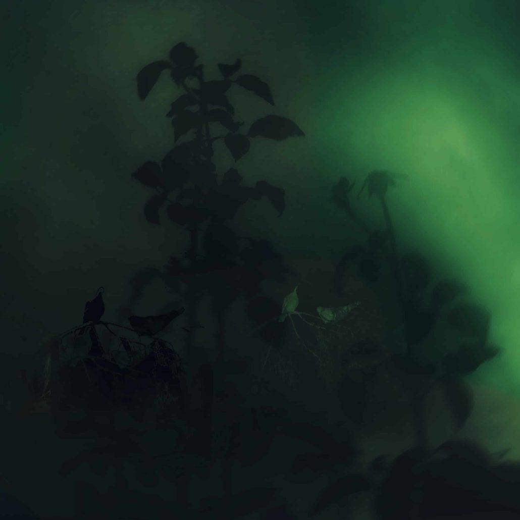 Birds in the green night