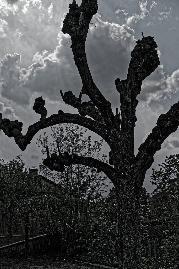 Arbre orageux