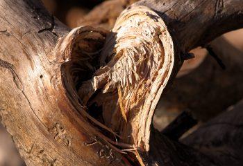 Le cœur de la déchirure...