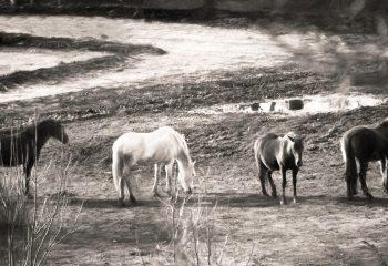 Where do horses go when they sleep?
