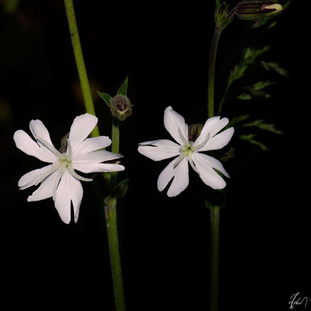 Flororité