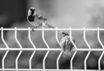 Série LA nature de nos cages