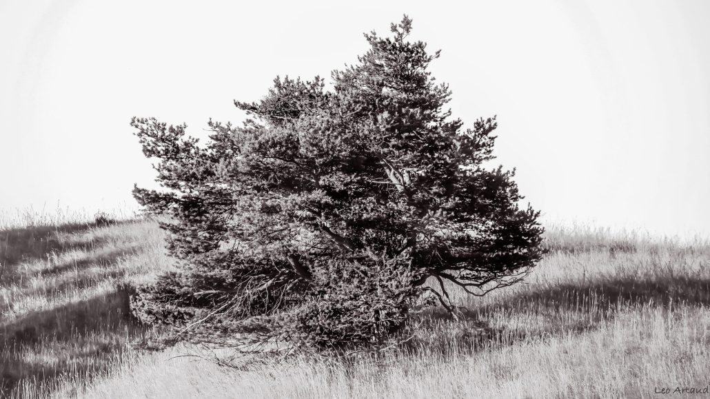 I am a poor lonesome old tree…
