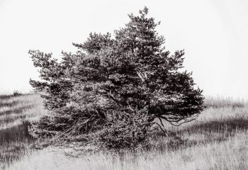 I am a poor lonesome old tree...