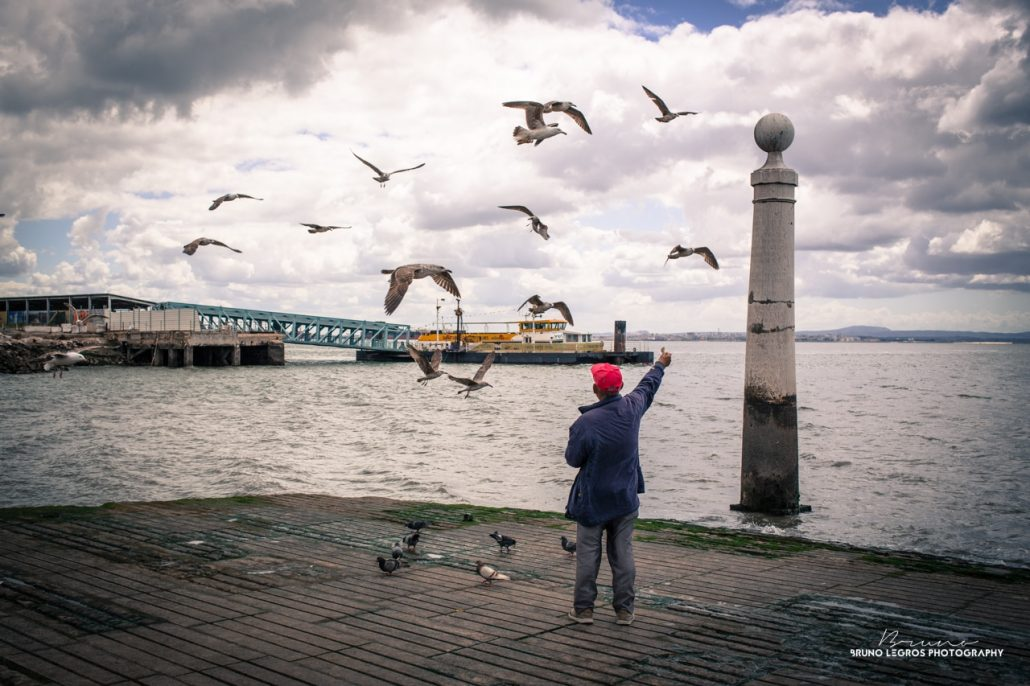 The man and birds