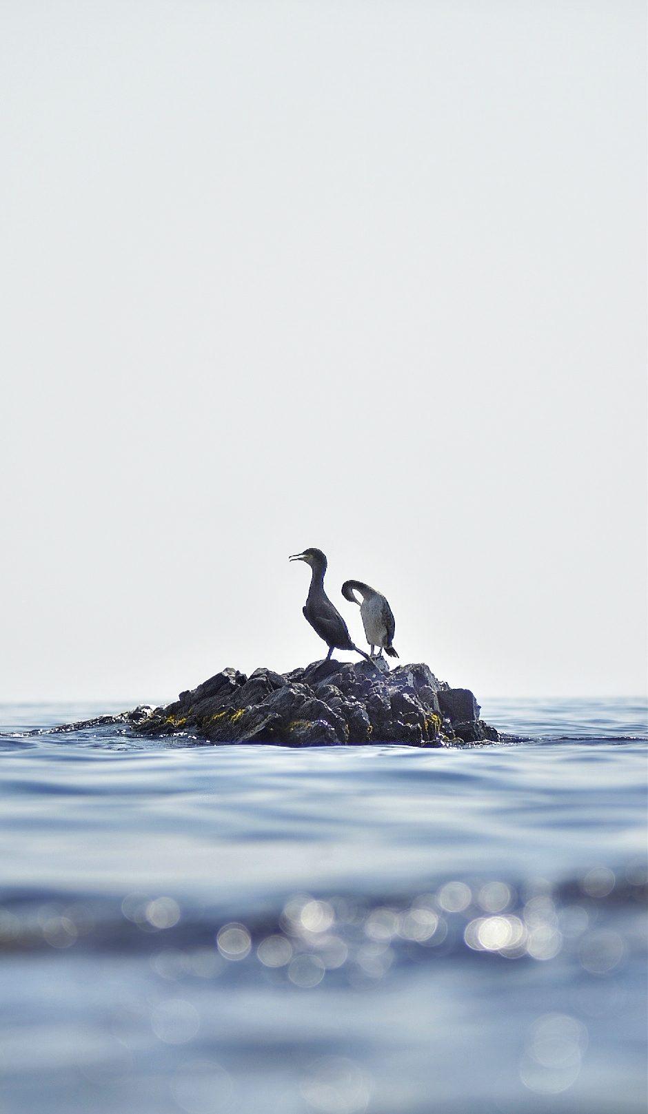 – Two Birds –