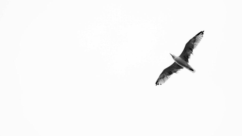 – Flyin' –