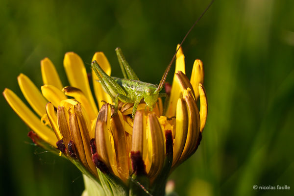 Jiminny Cricket