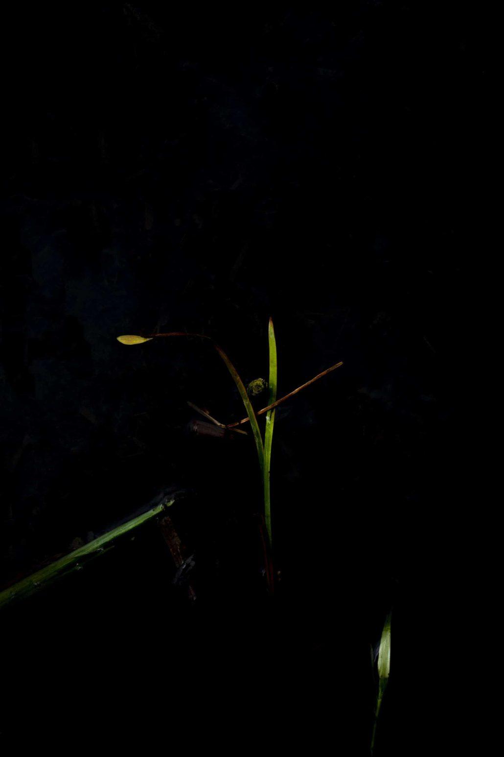 Dans les eaux sombres