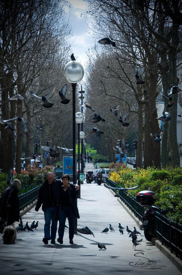 Les pigeons d'hitchcock