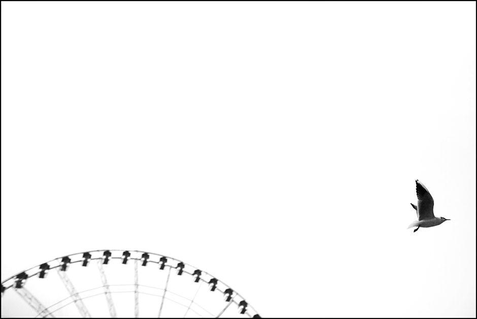 La mouette et la grande roue