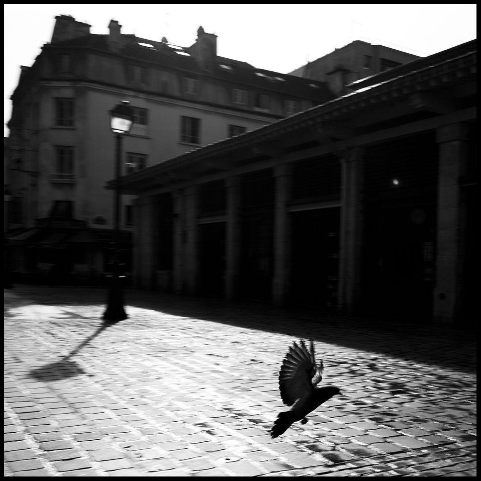 Le pigeon de la place d'Aligre