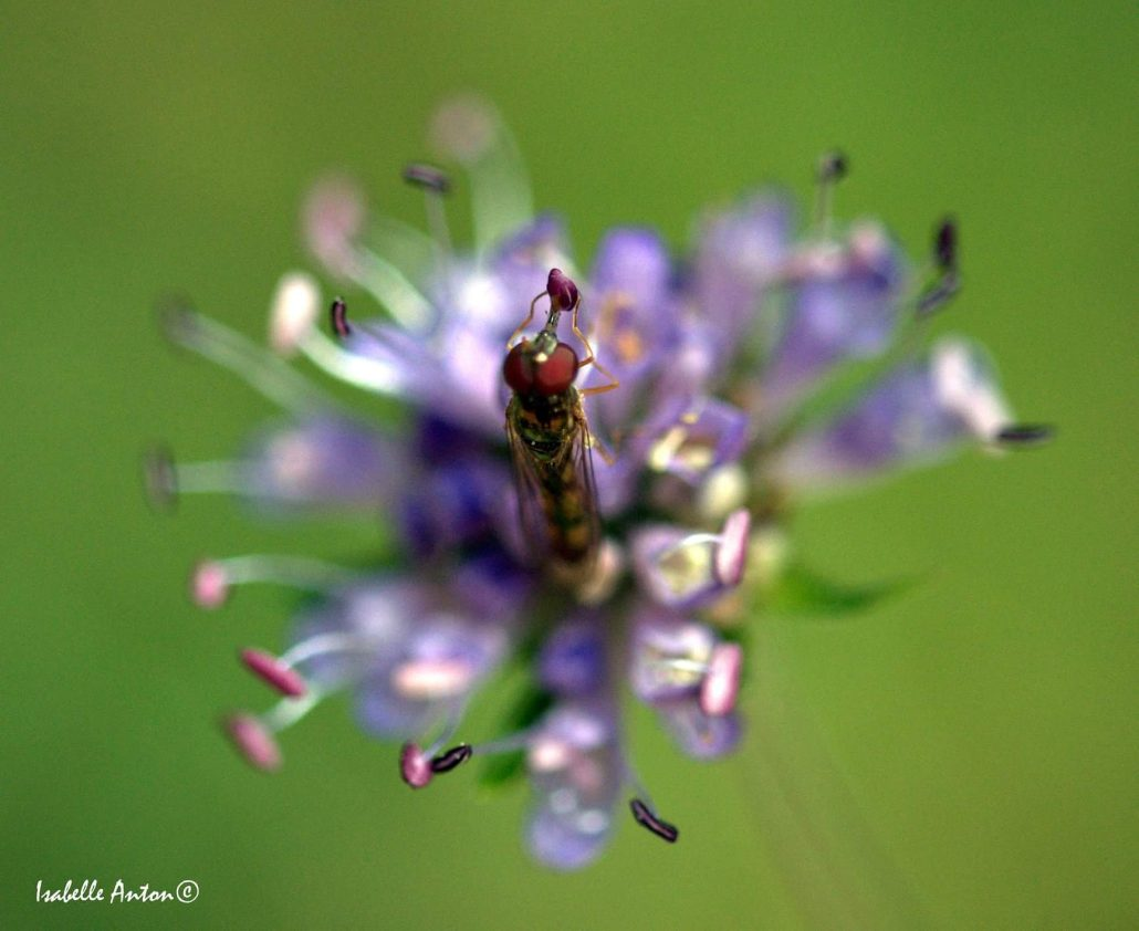 Fleur et insecte macro